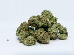 Dried Medical Marijuana