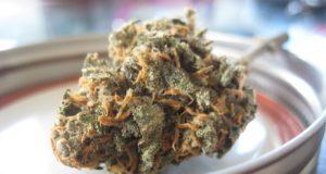 Dry Marijuana Herbs